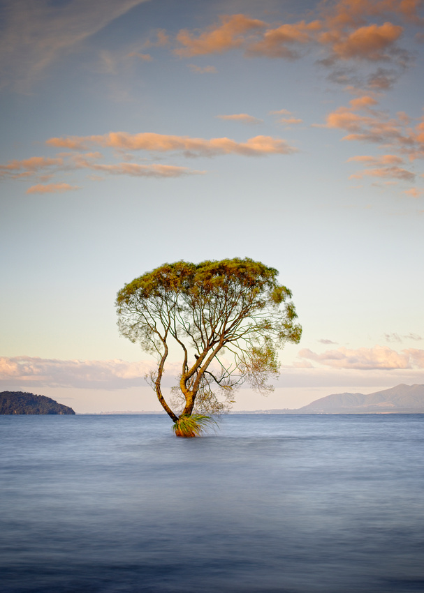 The Taupo tree in the lake.