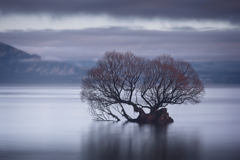 A tree in Lake Taupo.
